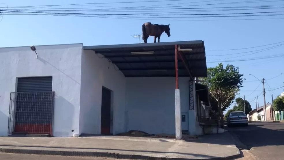 Cavalo mobiliza Corpo de Bombeiros no interior de SP — Foto: J. Serafim/Divulgação
