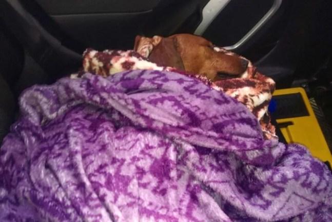 Cachorro foi encontrado enterrado em Tatuí — Foto: União Protetora dos Animais de Itapetininga/ Divulgação