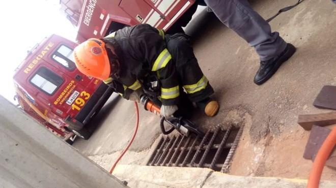 Bombeiro corta proteção de ferro para conseguir entrar na galeria e resgatar o animal — Foto: Kall Rigamonte