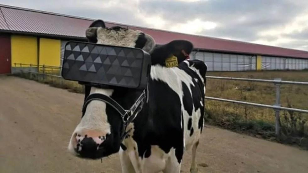O visor foi adpatado especialmente para a cabeça dos animais — Foto: Ministério da Agricultura da Rússia