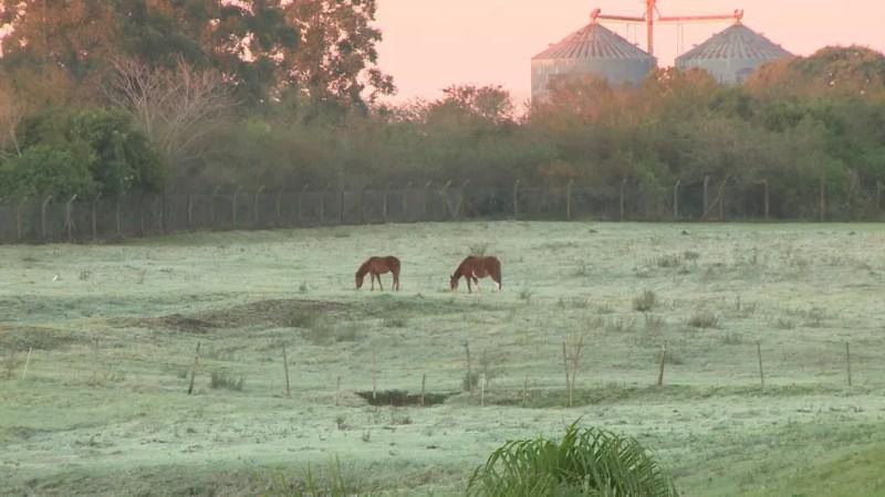 Uruguaiana, na Fronteira Oeste, teve 0,7°C com sensação de -1,7°C (Foto: Reprodução/RBS TV)