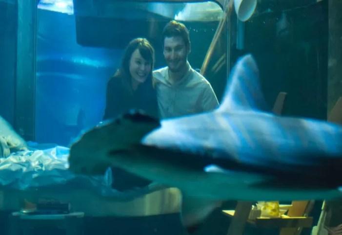 Separado apenas por parede transparente, o casal podia observar os predadores nadando ao redor do quarto (Foto: Michel Euler/AP)