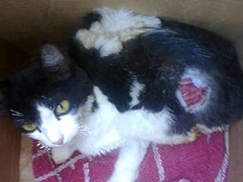 Dona de casa prestou socorro ao gato e levou em Associação (Foto: Arquivo Pessoal)