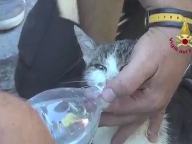 Gato foi resgatado de escombros de terremoto em Amatrice em 29 de agosto (Foto: Reprodução/Twitter/Vigili del Fuoco)