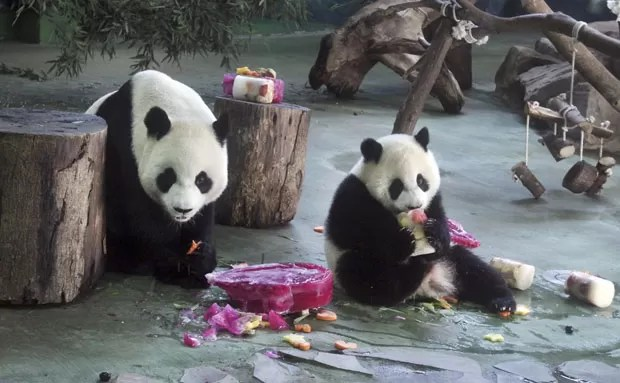 O panda Yuan Zai, comemora seu aniversário de um ano ao lado da mãe, Yuan Yuan, neste domingo (6) (Foto: Chiang Ying-ying/AP)