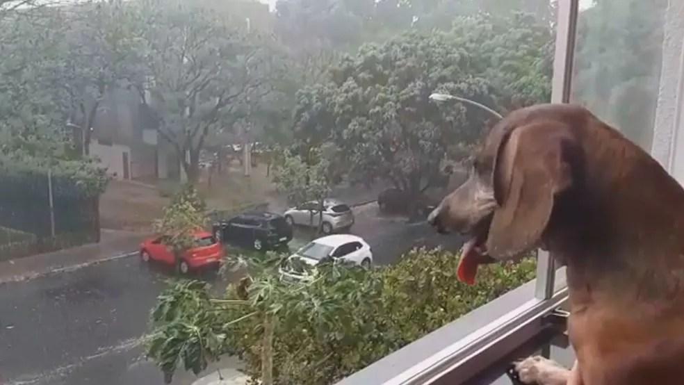 Cachorro na janela observa chuva na Asa Norte, no Distrito Federal  — Foto: TV Globo/Reprodução