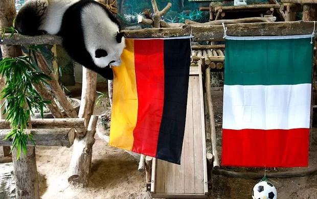 previsão urso panda zoológico Chiang Mai na tailândia (Foto: Agência EFE)
