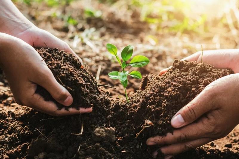 O plantio de árvores gera espírito de comunidade e só faz bem para a cidade. Mas é preciso respeitar algumas regras. — Foto: lovelyday12/ iStock