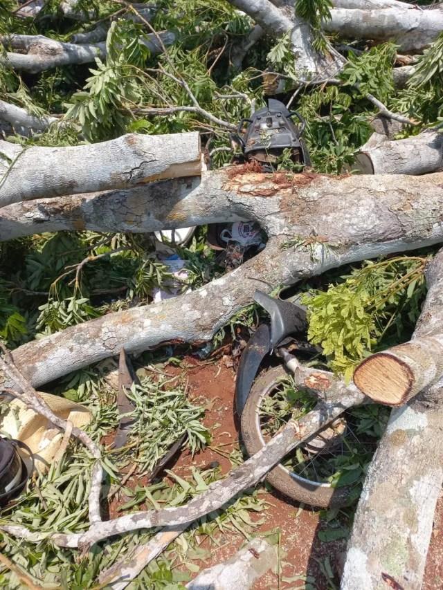 Árvore caiu sobre Cláudia e a motoneta. — Foto: Rudnei/Reprodução