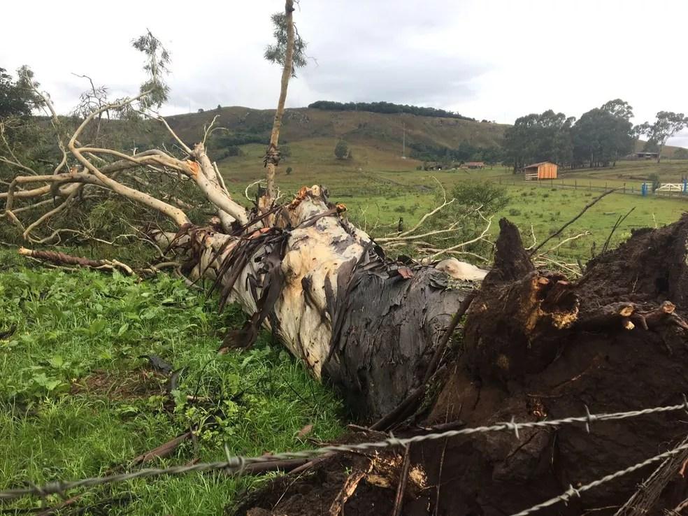 Lages também registrou queda de árvores em vendaval  (Foto: Carlos Alberto Becker/Divulgação )