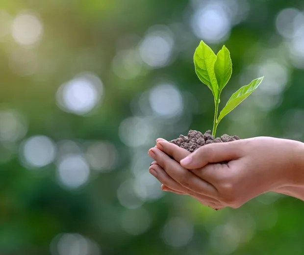 environment Earth Day In the hands of trees growing seedlings. Bokeh green Background Female hand holding tree on nature field grass Forest conservation concept (Foto: Getty Images)