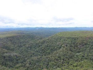 Extensão da Terra Indígena Yanomami  (Foto: Laudinei Sampaio)
