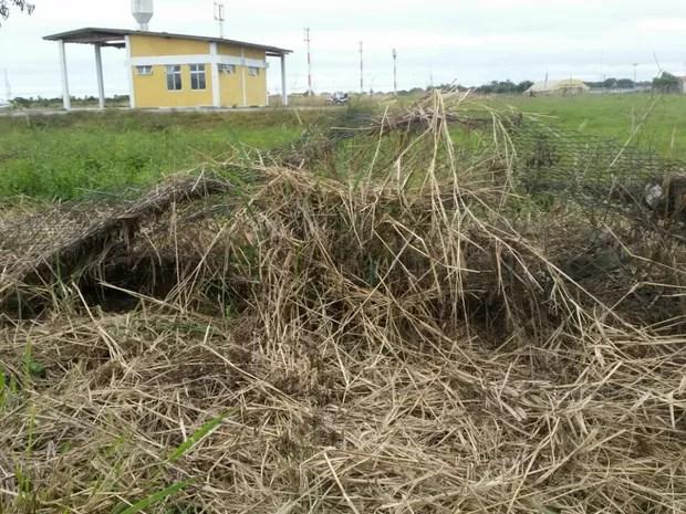 Cerca caída possibilita a entrada de animais na área do Aeroporto de Porto Murtinho, em Mato Grosso do Sul (Foto: Edicarlos Oliveira/Arquivo Pessoal)