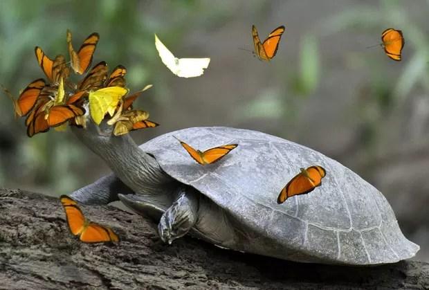 Resultado de imagem para lagrima de borboleta