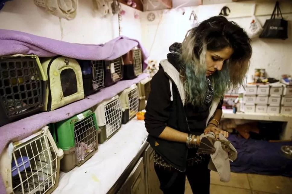blog_bat_3 Israelense se dedica a cuidar de morcegos 'fofos' Curiosidades Notícias