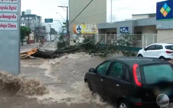 Chuva alagou ruas e derrubou árvores em Vitória da Conquista (Foto: Reprodução/TV Sudoeste)