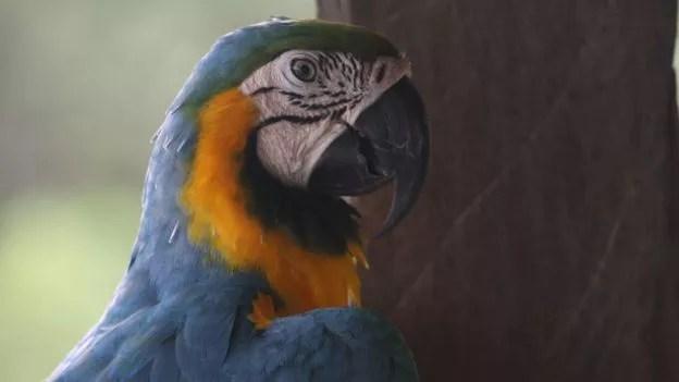 Afrouxmento de regulações na Amazônia se acentuou desde 2010 (Foto: MARIANA VEIGA via BBC)