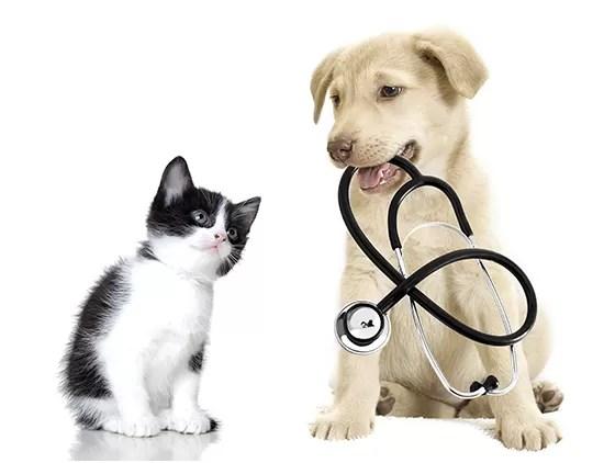 Gato e cachorro (Foto: Thinkstock )
