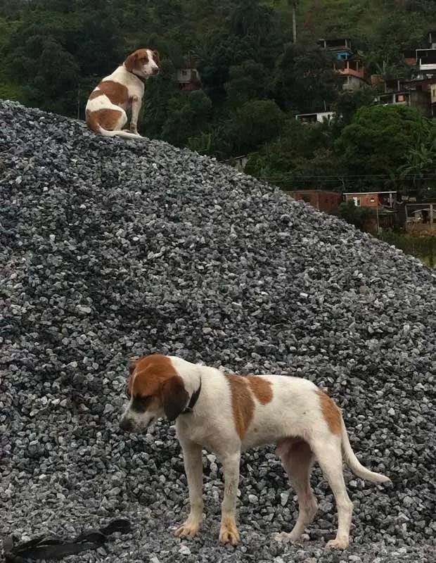Cães abandonados em Angra dos Reis (Foto: Carolina Lauriano/G1)