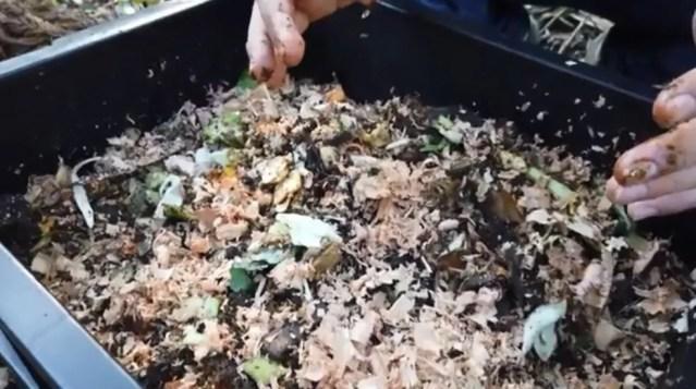 Composteira ajuda na preservação do meio ambiente com redução de lixo — Foto: RPC/Reprodução