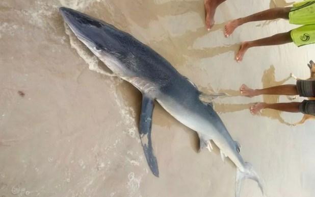 Curiosos se aproximaram para fotografar o tubarão (Foto: Arquivo Pessoal)