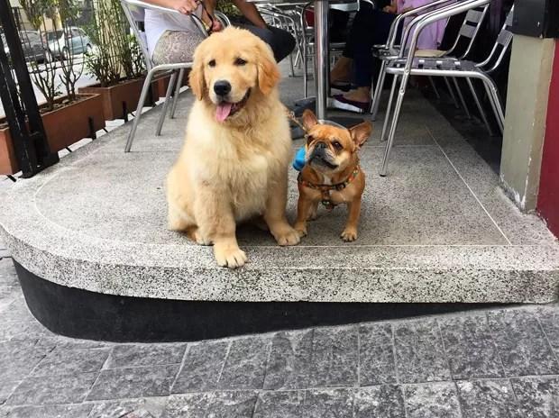 40 lugares para visitar com seu cachorro em São Paulo (Foto: Divulgação)