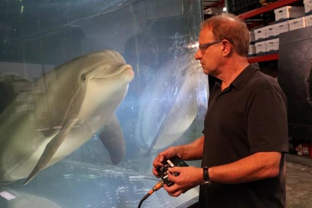 Golfinho-robô é mostrado na Califórnia; ele é movimentado por controle remoto — Foto: Nathan Frandino/Reuters