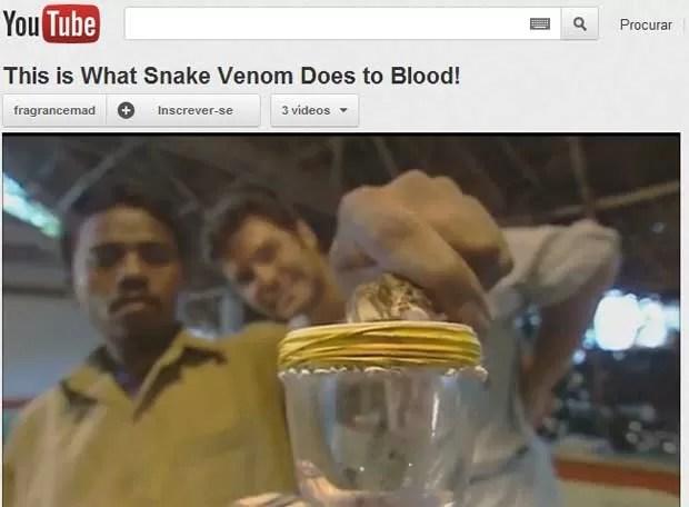 Vídeo que mostra o efeito do veneno de cobra  já foi assistido mais de 2 milhões de vezes (Foto: Reprodução)