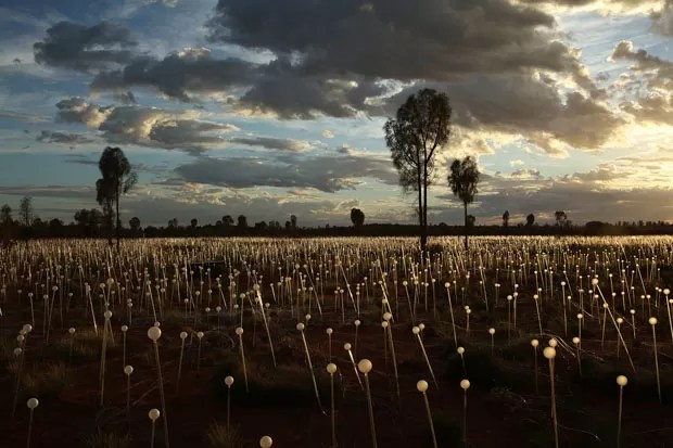 Field of Light Bruce Munro (Foto: CortesiaBruce Munro)