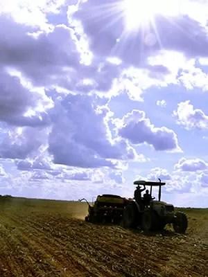 Plantio de soja em MT (Foto: Leandro J. Nascimento/G1)