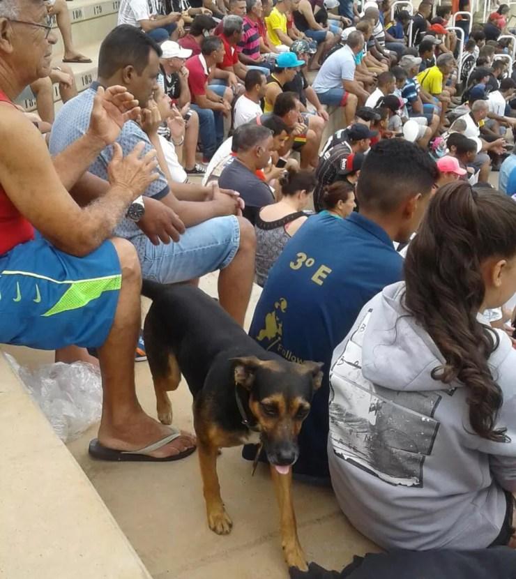 Cão foi levado para assistir jogo do CAV — Foto: Fábio Audi Rogério/Arquivo Pessoal