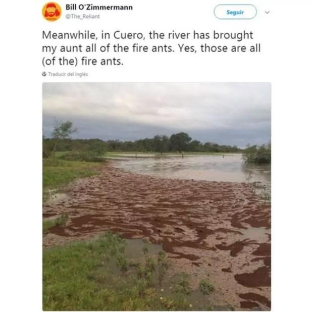 Não é lama, mas sim milhares de formigas  (Foto: @The_Reliant/Twitter)