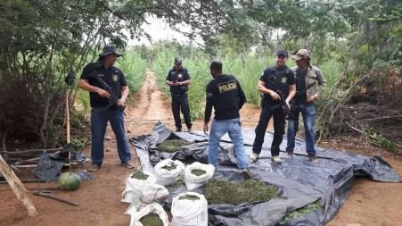 Polícia ainda encontrou 40 kg da droga pronta para comercialização (Foto: Divulgação / Polícia Civil)