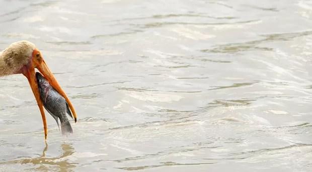 Cena ocorreu no Parque Nacional de Yala. (Foto: Ishara S.Kodikara/AFP)