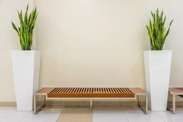 Plantas para apartamentos (Foto: Divulgação)