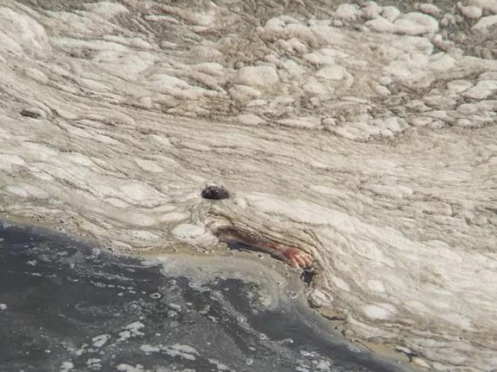 Corpo foi flagrado na Baía de Guanabara na última segunda (22) (Foto: G1)