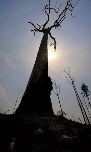 Árvore destruída em área de queimada ilegal na floresta amazônica (Foto: Antonio Scorza/AFP)