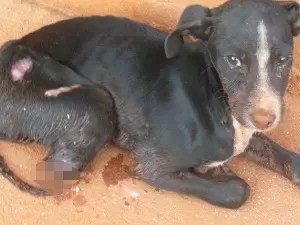 Cachorro teve patas cortadas em Pires do Rio, Goiás (Foto: Divulgação/Polícia Militar)