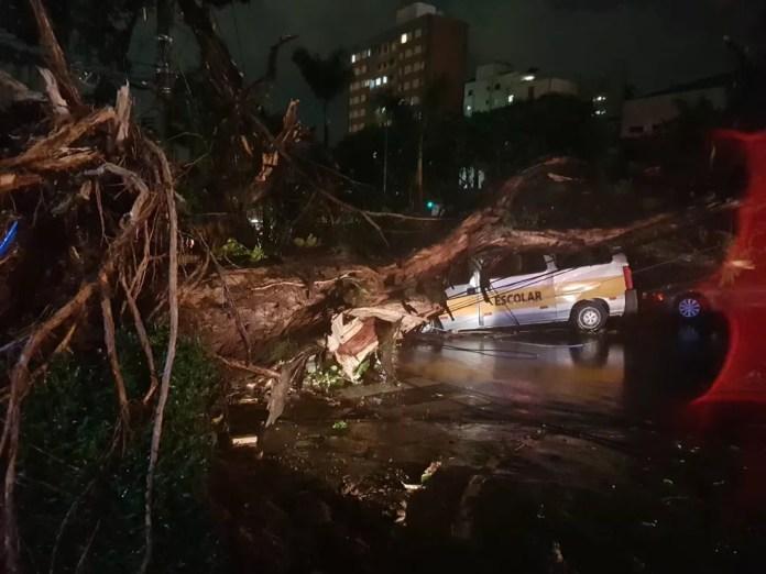 Árvore cai sobre van na Avenida Nossa Senhora do Carmo, em BH, e motorista fica preso às ferragens — Foto: Danilo Girundi/TV Globo