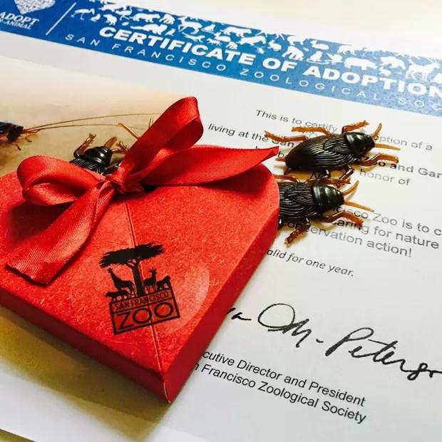Certificado de adoção e caixa de baratas de plástico (Foto: REUTERS/San Francisco Zoo/Handout via Reuters)