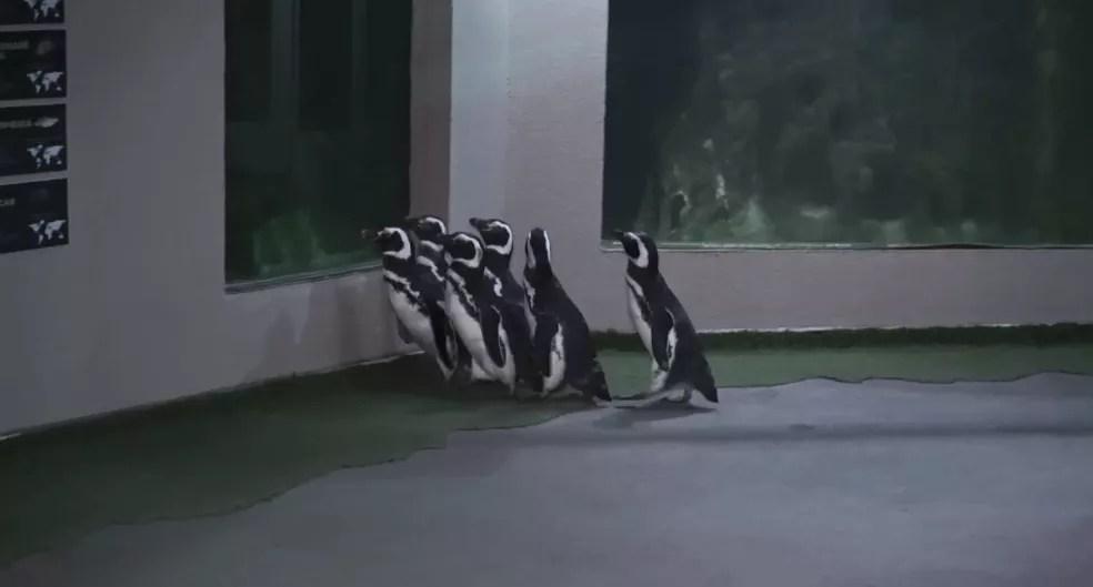 Os pinguins adolescentes foram apelidados pela equipe de Joey, Ross, Chandler, Phoebe, Mônica e Rachel — Foto: RockSet/Divulgação