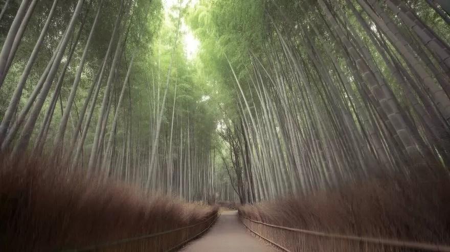 Fotógrafos e florestas (Foto: Hidenobu Suzuki / Divulgação)