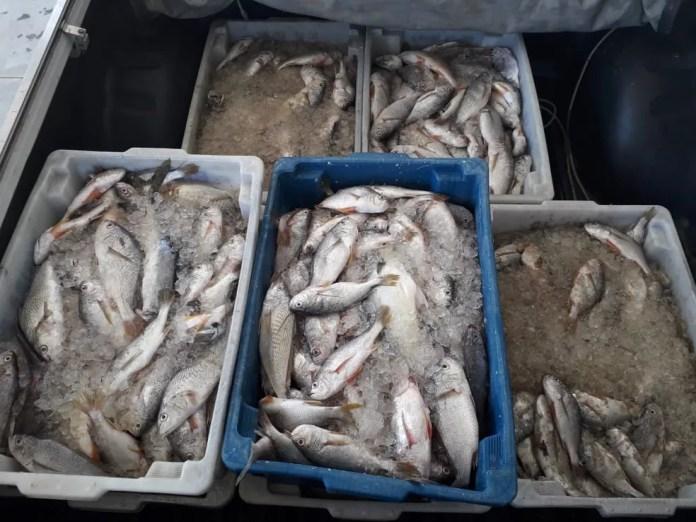 Polícia apreende 120 quilos de peixe em pesca irregular em Ubatuba — Foto: Divulgação/ Polícia Ambiental