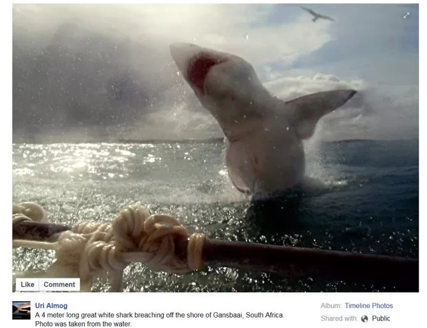 Uri Almog registrou imagem impressionante de salto de tubarão branco (Foto: Reprodução/Facebook/Uri Almog)