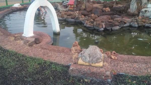 Peixes foram encontrados mortos em fonte de Pereira Barreto (SP) (Foto: Arquivo Pessoal)