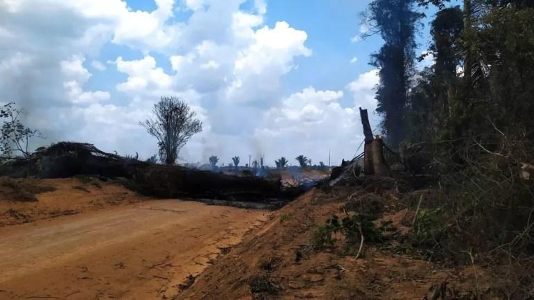 Árvore caiu sobre fio de energia em Cujubim — Foto: WhatsApp/Reprodução