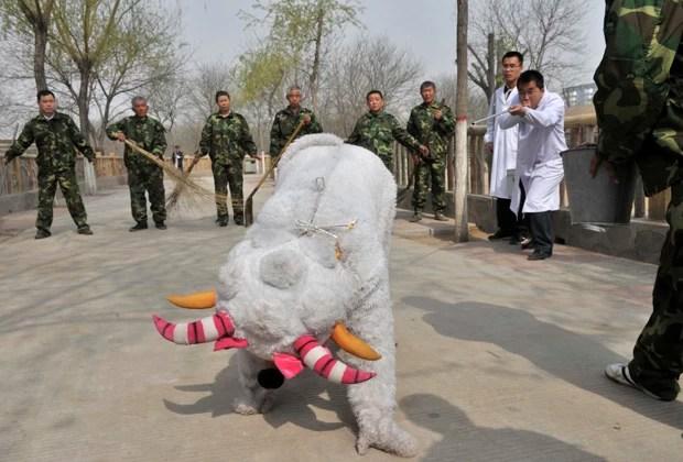 Veterinário finge atirar dardo tranquilizante em 'criatura' durante treinamento em zoo chinês (Foto: China Daily/Reuters)