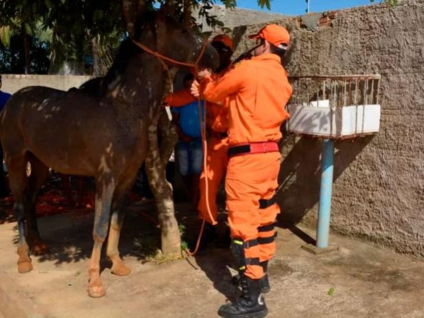Cavalo foi levado para o Centro de Zoonoses (Foto: Jeferson Carlos/G1)