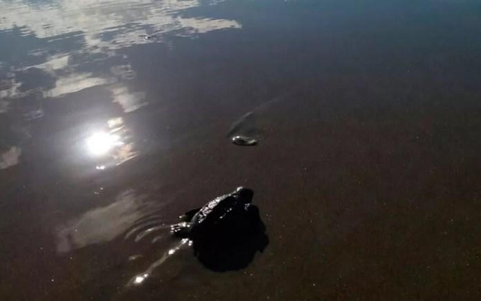 Nascimento foi flagrado por grupo que limpava praia (Foto: Vinícius Alcântara / Arquivo Pessoal)