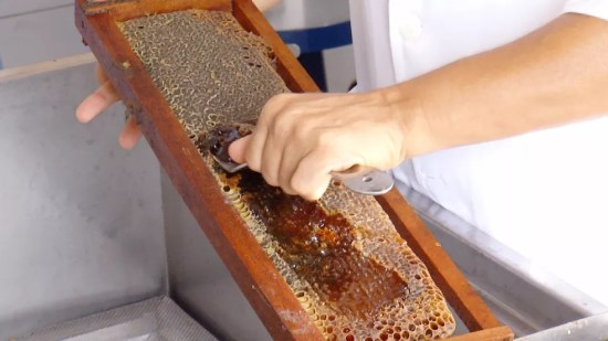 Com uso de tecnologia, o cenário deve ser mais animador para o apicultor (Foto: Reprodução/Inter TV Cabugi)